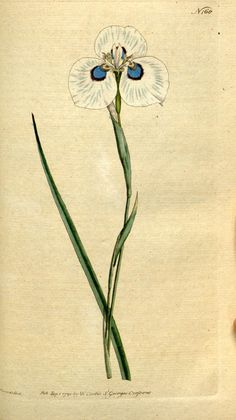 v.5-6 (1792-1793) - The Botanical magazine, or, Flower-garden displayed ... / - Biodiversity Heritage Library