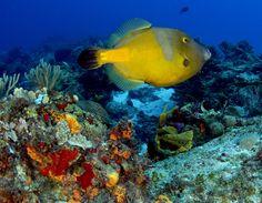 Colorful Filefish