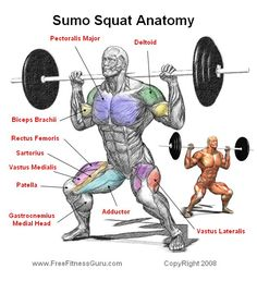 22 Ideas For Strength Training Anatomy Squats Training Legs, Weight Training Workouts, Strength Training, Fitness Exercises, Kettlebell Training, Butt Workouts, Chest Workouts, Training Motivation, Fitness Motivation