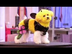 New show on Animal Planet, comes on Friday May 3rd at 10 ET and 11:30 ET. Creative dog grooming! It is going to be a good show to watch.. It's called CLIPPED watch on Animal Planet! (This is not spam just youtube CLIPPED on Animal Planet)