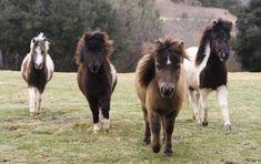 MINI HORSES                                                                                                                                                                                 More