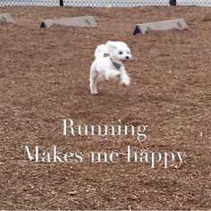 #happydog