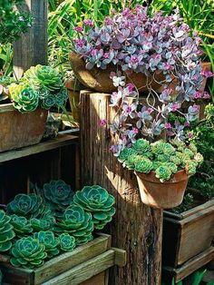 beautiful succulent textures