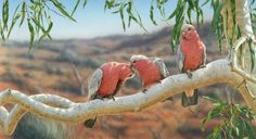 Tickled Pink - artist Greg Postle, limited edition canvas giclee RARE AP, available from Landsborough Galleries
