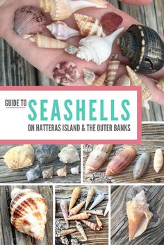 Miles of untouched shoreline on Hatteras Island and most of the Outer Banks make it a paradise for any beachcomber. Use our guide to identifying seashells you are unsure of! Outer Banks North Carolina, Outer Banks Nc, Outer Banks Vacation, South Carolina, Nags Head North Carolina, North Carolina Vacations, Ocracoke Island, Hatteras Island, Beach Trip