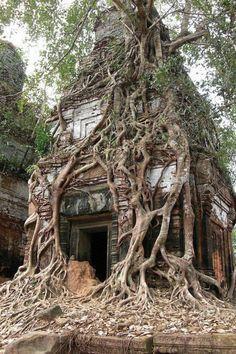 Tree house. Or house tree?
