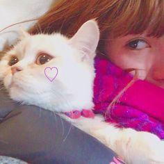 ♡♡♡ #ナポレオン #ミヌエット #マンチカン #ペルシャ #猫 #短足猫 #短足部  #子猫 #にゃんすたぐらむ #にゃんだふるらいふ #かわいい #cat #cute #love #愛猫 #instacat #instalike #instagood #instagram