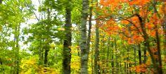 autumn driveby