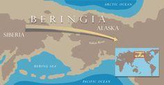 Beringia es el nombre dado al puente de tierra que una vez conectó Asia y Norteamérica el cual cubrió una gran superficie antes de sumergirse en el final de la última Era Glaciar hace unos 12,000 años.