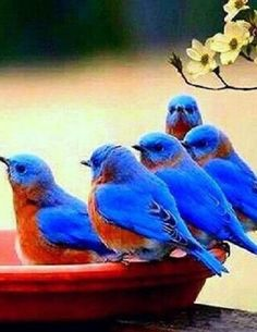 Cottage - Blue Birds of Happiness