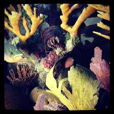 Diorama from The Hall of Ocean Life