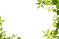 Free download -  leaves frame transparent PNG image