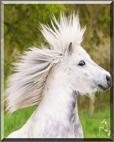 PUNK PONY ;-)))) new TRUMP hairstyle ? #Fotograf: SiMa-Photos #horse funny cute