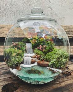 Terrarium Scene, Terrarium Plants, Succulent Terrarium, Fairy Terrarium, Diy Garden Fountains, Garden Pots, Plants In Bottles, Indoor Water Garden, Garden Deco