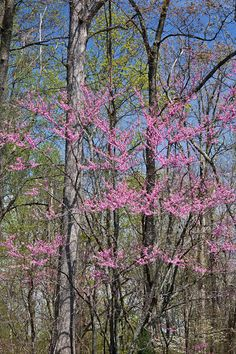 Posts about spring written by leerentz Natchez Trace, Spring Time, Eye Candy, Scenery, Bloom, Plants, Photography, Travel, Photograph