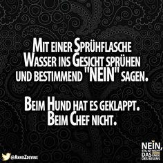 Schade :D #Chef #Hund #Funny #Lachen #Lachenistgesund #Sprüche #Lustigesprüche #Besenstilvoll #Besenstil #Lol