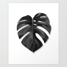 Monstera, monstera leaf, palm leaf, monstera deliciosa...