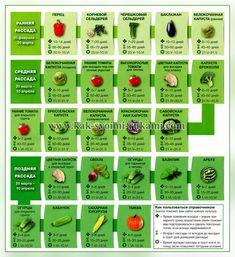 Как выращивать рассаду - когда и как сажать, посев и семена | Своими руками - Как сделать самому Summer House Garden, Green Garden, Vegetable Garden Design, Garden Tools, Market Garden, Growing Seeds, Small Farm, Garden Structures, Farm Gardens