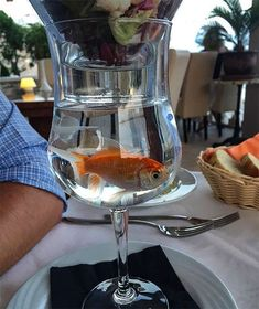 Restaurants Went Too Far With Food Serving – 100 Funny Pics