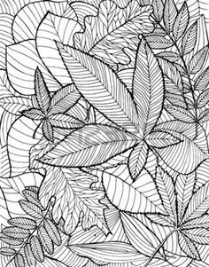 dibujos de hojas de otoño: Ejemplo dibujado mano con varias hojas caídas en el fondo blanco.