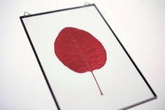 framed cotinus herbarium by boxwoodtree on Etsy