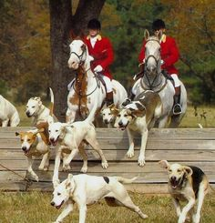 Foxhunting is my favorite sport because it encourages upper-class Englishmen to get wasted and go do some cross country jumping