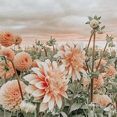 ✰p i n t e r e s t: xxsarahelisexx✰ - Modern Peach Aesthetic, Nature Aesthetic, Flower Aesthetic, Aesthetic Collage, Spring Aesthetic, Aesthetic Beauty, Aesthetic Vintage, Flower Phone Wallpaper, Iphone Background Wallpaper