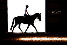 Senior horses equine  equestrian photography