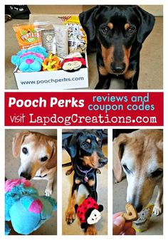Check out our monthly reviews of #PoochPerks dog subscription box + get coupons at  #sponsored Dog MomDog Toys   Subscription Box   Dog Products   Coupon Code   Dog Treats:
