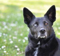Tipps & Tricks zur Hundefotografie