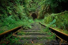 Nature finds a way - 40 Incredible Photos of Breathtaking Places