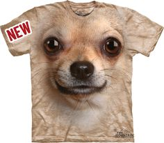 Big Face Chihuahua « Epic Shirts  This must be the biggest Chihuahua in the world – even if you choose kids small size. The chihuahua-shirt is so big, that the shirt almost weighs more than a real-life Chihuahua. We are pretty sure that this breed has evolved from rats, but just turned out to be so cute that we have put it as dog breed.