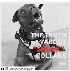 #Repost @southenddogtraining with @get_repost...