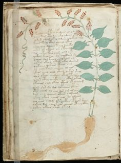 Voynich Manuscript, a mysterious, undeciphered manuscript dating to the 15th or 16th century.