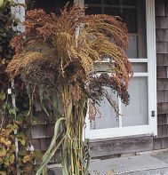 grasses for outdoor fall decor
