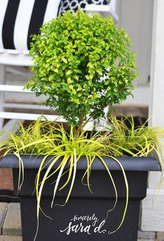 Create a Patio Oasis with Southern Living Plants - Sincerely, Sara D. Lemon Lime Nandina, Tall Plants, Potted Plants, Unique Plants, Bathroom Plants, Porch Decorating, Decorating Ideas, Southern Living, Shade Garden