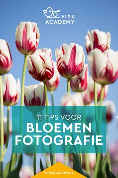 Bloemen fotograferen: 11 tips • Vink Academy Instax Mini Camera, Studio Setup, Photo Tips, Photography Tips, Photoshop, Creative, Photographers, Flower, Tattoos