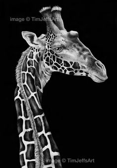 Giraffe Ink Drawing. Tim Jeffs Art on Etsy