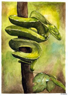 Watercolour Of A Snake By Marianne Rijvers