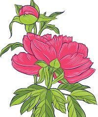 A peony tattoo is a good choice for those tattoo lovers who are looking for a truly fascinating tattoo with a deep symbolic meaning. Peony tattoos are believed to be a representative of wealth and fortune. Peonies Tattoo, Flower Artwork, Japanese Flowers, Peony, Bud, Tattoos, Plants, Design, Tatuajes