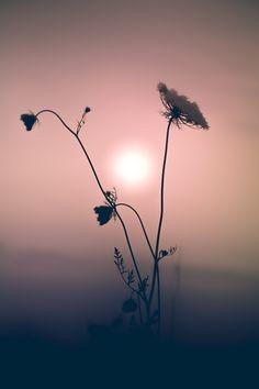 Go Your Own Way Photo in Album Floral Portraits - Photographer: Paul Barson