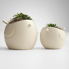 Hen + Chicks Succulents - modern - indoor pots and planters - RedEnvelope