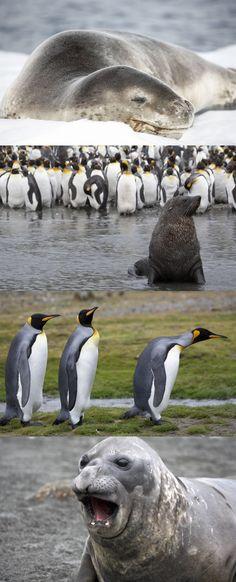 Falkland Islands, South Georgia and Antarctica