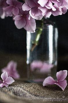 Looks like a lovely Hydrangea flower!