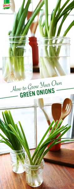 With spring blooming, nothing brings the flavors out of your recipes like using your own ingredients! You can have quick access to fresh green onions by letting your bulbs regrow right in your kitchen.