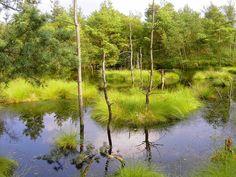Naturdetektive für Kinder - www.naturdetektive.de: Moor - Fundgrube für seltene Arten