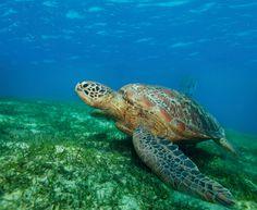 Turtle Tracking on Miniloc Island
