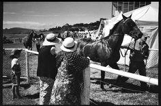 New Years Day Races - Waikouaiti - Dunedin - New Zealand Dunedin New Zealand, Documentary Photographers, Street Photography, Documentaries, Mcqueen, Racing, Horses, Animals, Running
