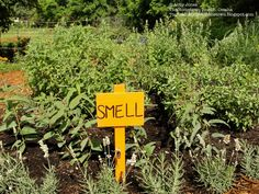 Picardo children's garden idea- smell garden
