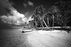 """""""Cayo Costa Island 3"""" by Clyde Butcher.  He is totally amazing."""